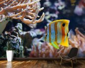 Copperband Butterflyfish wall mural kitchen preview
