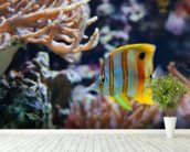 Copperband Butterflyfish wall mural in-room view