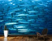 Barracuda Fish mural wallpaper kitchen preview