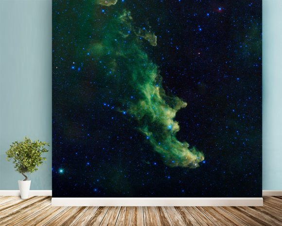 'Witch Head' Brews Baby Stars wall mural room setting