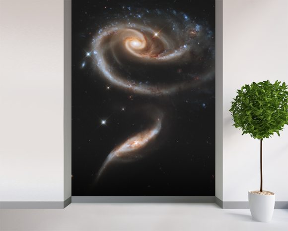 "A ""Rose"" Made of Galaxies Highlights Hubble's 21st Anniversary wall mural room setting"