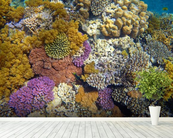 Coral Reef Garden wallpaper mural room setting