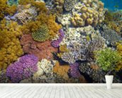Coral Reef Garden wallpaper mural in-room view