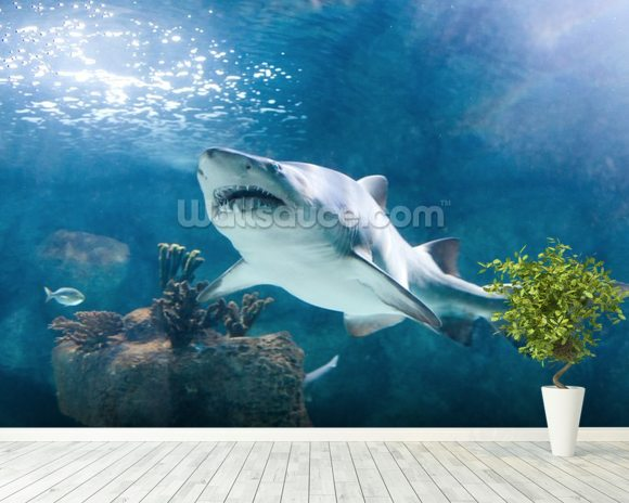 Shark mural wallpaper room setting