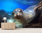 Sea Lion wallpaper mural living room preview