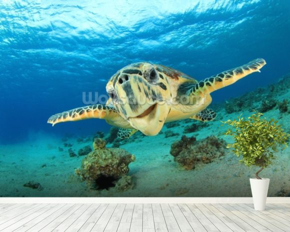 Hawksbill Sea Turtle wall mural room setting