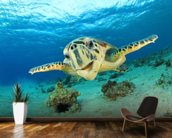 Hawksbill Sea Turtle wall mural kitchen preview