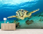 Hawksbill Sea Turtle wall mural living room preview