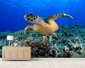 Sea Turtle in Tropical Waters wallpaper mural living room preview