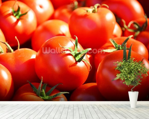 Tomatoes mural wallpaper room setting