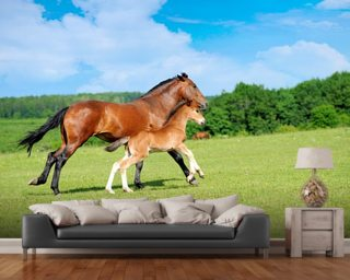 Horse and Foal mural wallpaper