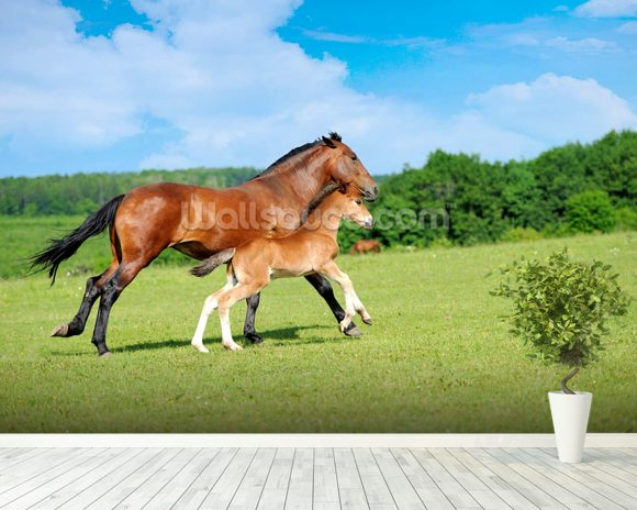 Horse and Foal mural wallpaper room setting