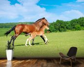 Horse and Foal mural wallpaper kitchen preview