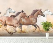 Galloping Herd of Horses wall mural in-room view