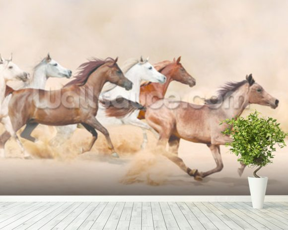 Horses herd running in the sand storm wallpaper mural room setting