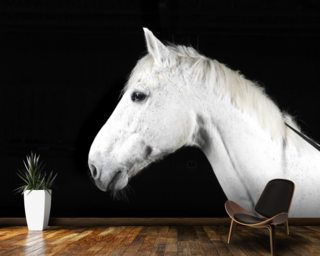 Handsome White Horse mural wallpaper