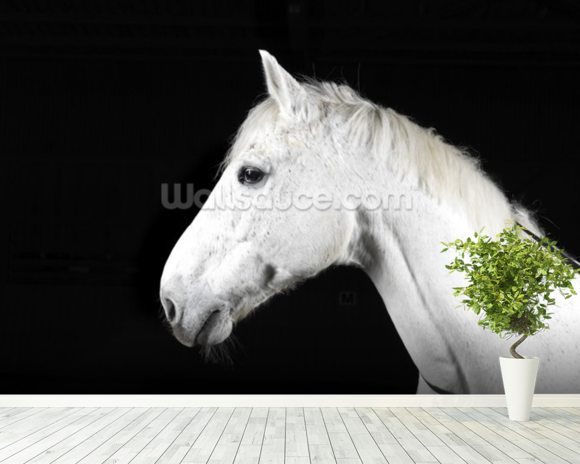 Handsome White Horse mural wallpaper room setting
