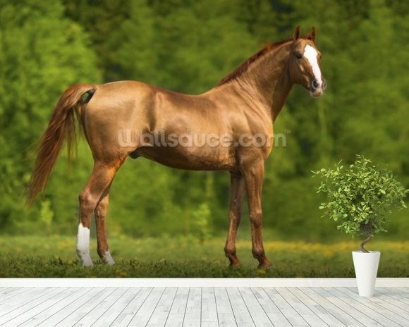 Horse in Summer wall mural room setting