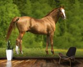 Horse in Summer wall mural kitchen preview