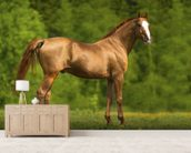 Horse in Summer wall mural living room preview