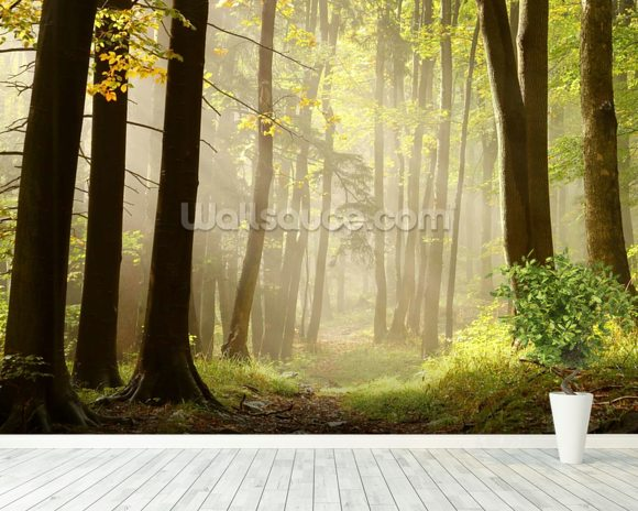 Forest Pathway mural wallpaper room setting