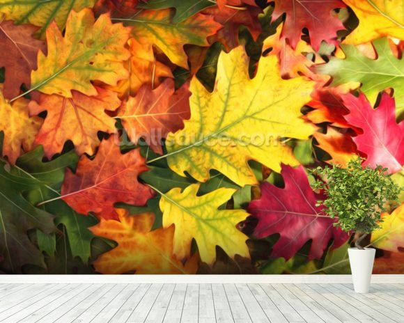 Colourful Autumn Oak Leaves mural wallpaper room setting