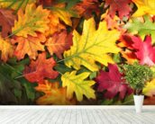 Colourful Autumn Oak Leaves mural wallpaper in-room view