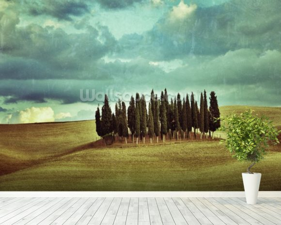 Cypress Trees on Tuscan Landscape wallpaper mural room setting