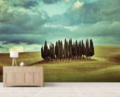 Cypress Trees on Tuscan Landscape wallpaper mural living room preview