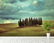 Cypress Trees on Tuscan Landscape wallpaper mural in-room view
