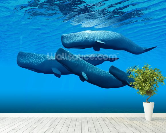Sperm Whale Family wall mural room setting