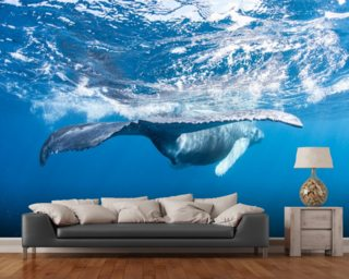 Whale Tail mural wallpaper