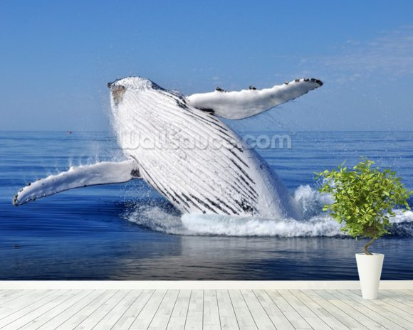 Humpback Whale wall mural room setting