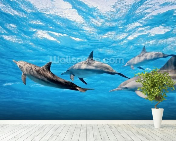 Dolphin Pod wallpaper mural room setting