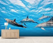 Dolphin Pod wallpaper mural living room preview