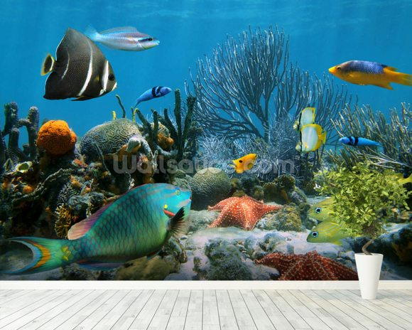 Coral reef wallpaper wall mural wallsauce usa for Coral reef mural