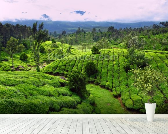 Tea Plantation, India wall mural room setting