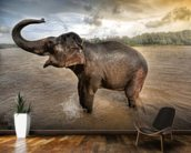 Elephant Bathing wallpaper mural kitchen preview