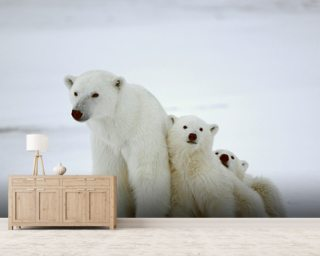 Polar Bear Mural Wallpaper Wall Murals Wallpaper