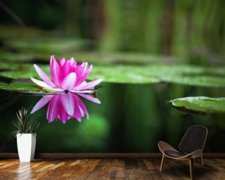 Pink Waterlily wall mural