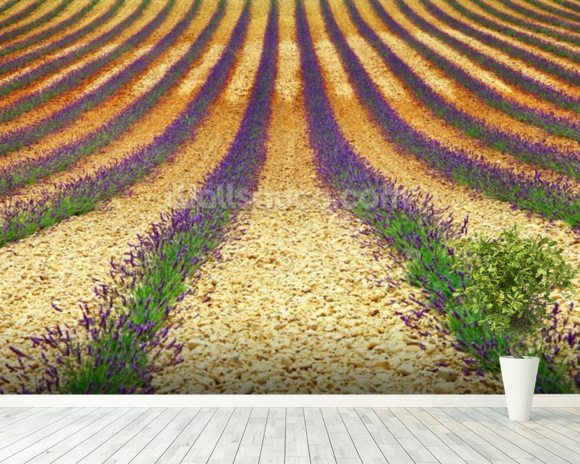 Lavender Field, Provence wall mural room setting