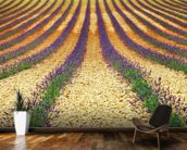 Lavender Field, Provence wall mural kitchen preview