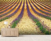 Lavender Field, Provence wall mural living room preview