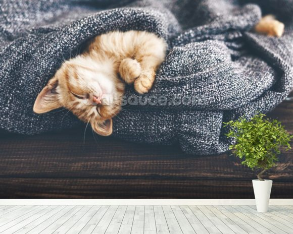 The Cutest Kitten wall mural room setting