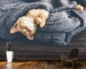 The Cutest Kitten wall mural kitchen preview