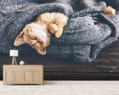 The Cutest Kitten wall mural living room preview