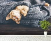 The Cutest Kitten wall mural in-room view