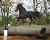 Flying Black Stallion wall mural kitchen preview