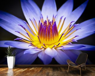 Colourful Waterlily mural wallpaper