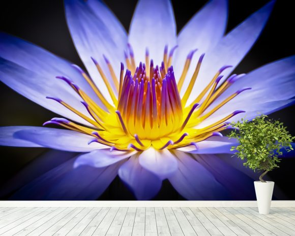 Colourful Waterlily mural wallpaper room setting